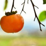 霜降の食べ物~柿