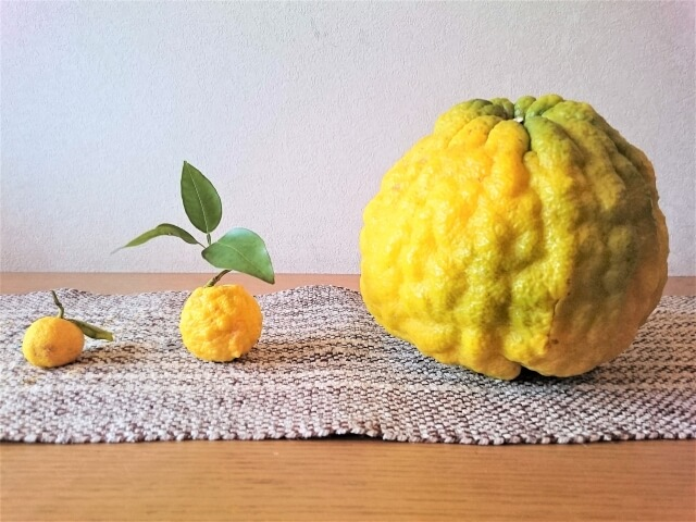 冬至の食べ物~柚子