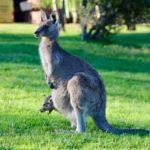 オーストラリアの祝日2021